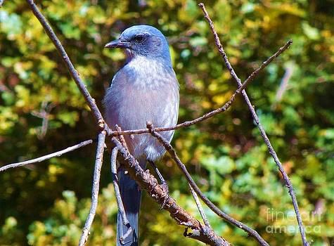 Autumn Bluebird by Donna Parlow
