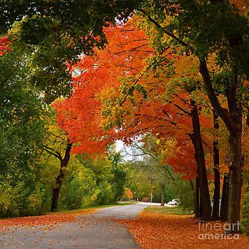 Autumn Canopy by Sue Stefanowicz