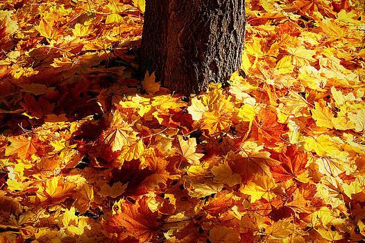 Autumn Carpet by Linda Edgecomb