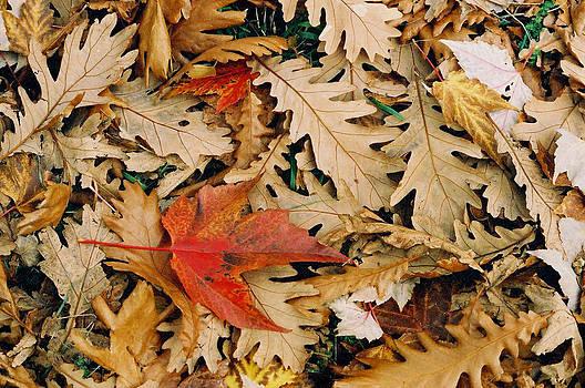 Autumn Carpet by Steve Watson