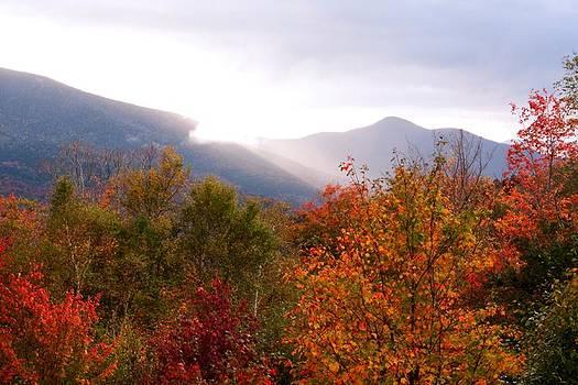 Autumn Color by Amanda Kiplinger