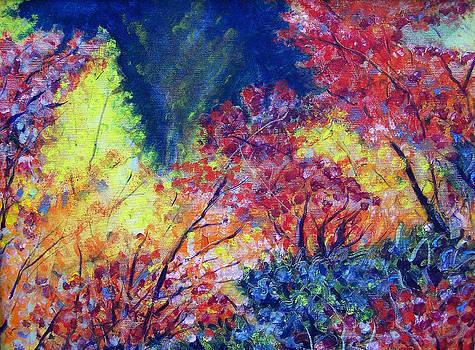 Autumn Color by Jon Shepodd