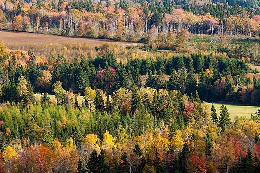 Matt Dobson - Autumn Colors on the Bonshaw Hills
