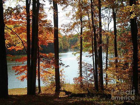 Autumn Colors by Sandy Owens