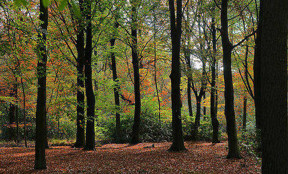 Autumn colours by Erik Tanghe