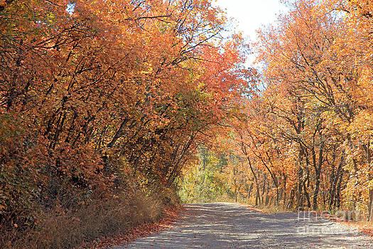 Autumn Escape  by Carla   Stanley