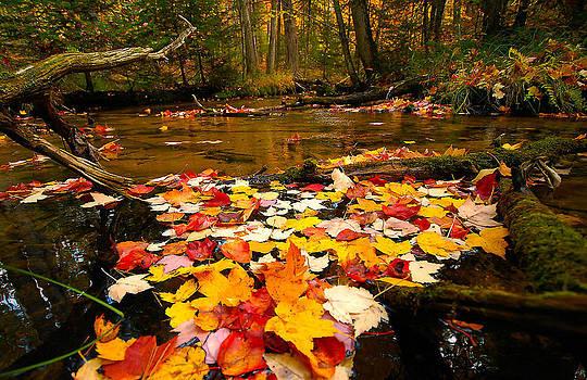 Autumn floating carpet by Dan Nielsen