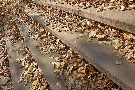 Autumn - foliage on stairs by Matthias Hauser