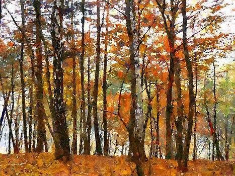 Autumn forest by Boguslaw Florjan