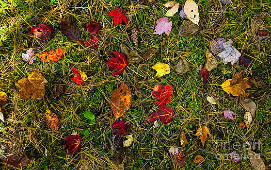 Autumn Forest Floor by Matt Tilghman