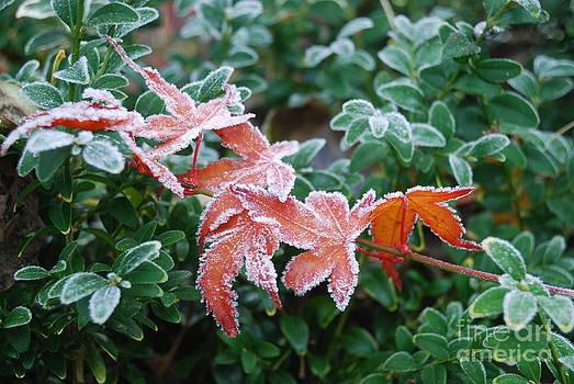 Autumn Frost by Nancie Teresa