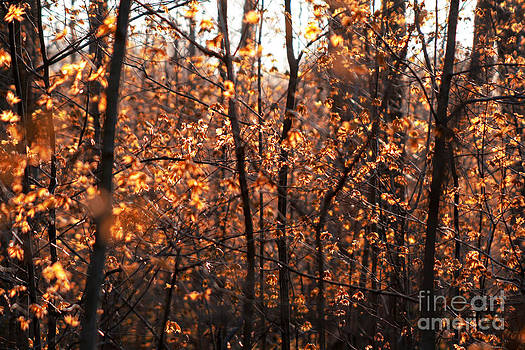 Autumn Glory by Chris Hill