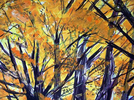 Autumn Gold by Jon Shepodd