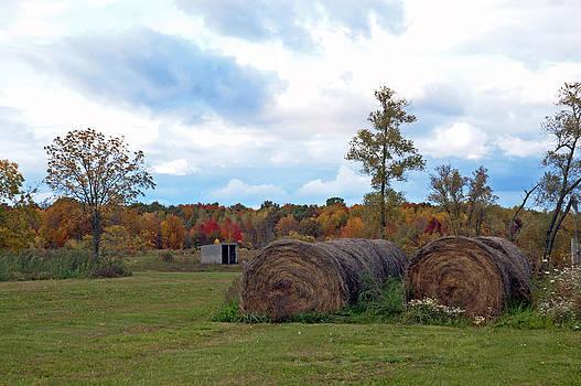 Autumn Hay by Cheryl Cencich