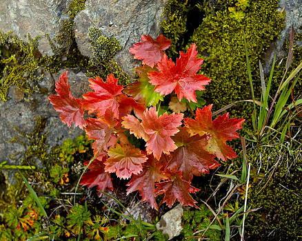 Autumn in Canada by Sylvia Hart