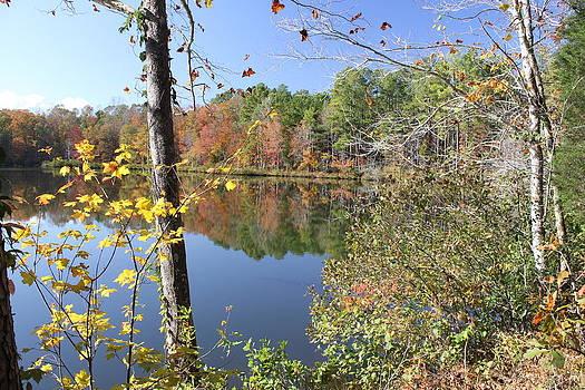 Autumn in South Carolina by John Gans