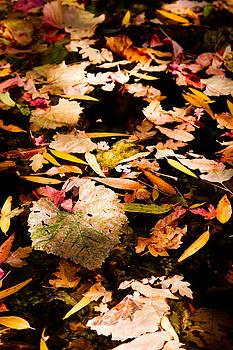 Jason Smith - Autumn in Texas
