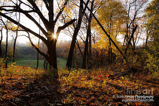 Autumn in the Arb by Scott Heister
