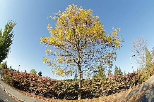 Margaret Pitcher - Autumn in the Park