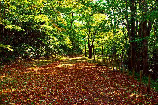 Autumn in the Park by Tim Ernst
