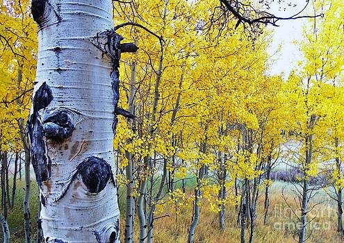 Autumn in the Rockies by Donna Parlow