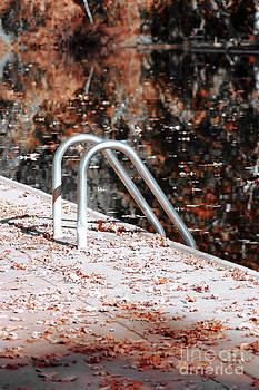 Autumn Ladder by David Taylor