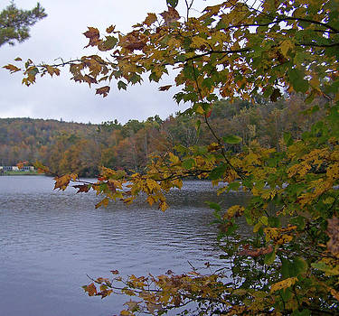 Patricia Taylor - Autumn Lake