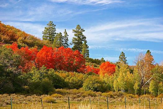 Autumn Landscape by Sharon I Williams