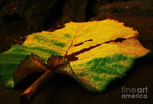 Autumn Leaf by Daniele Smith