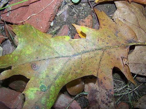 Patricia Taylor - Autumn Leaf