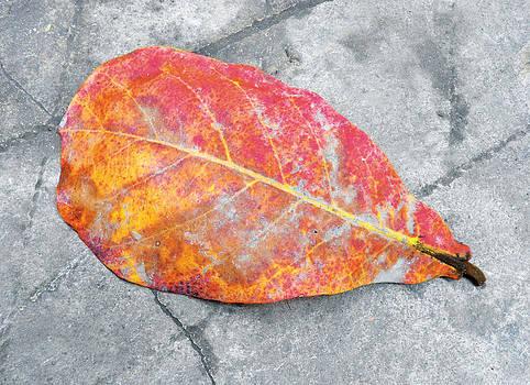 Autumn leaf by Subhankar Bhaduri