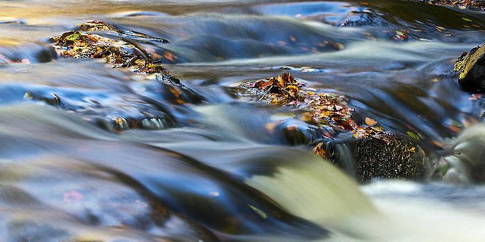 David Pringle - Autumn Leaves In Water III