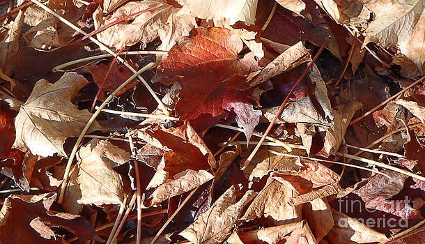 Autumn leaves by Marisa Gabetta