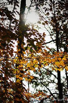 Autumn leaves by Shehan Wicks
