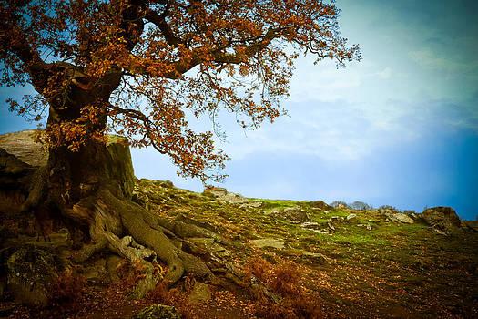 Autumn Ledge by Ruth MacLeod