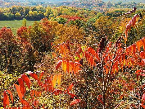 Autumn Lyrics 2 by Nina Nabokova