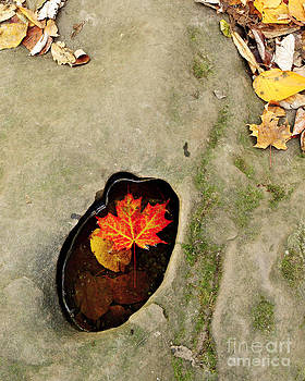 Autumn Maple Leaf by Matt Tilghman