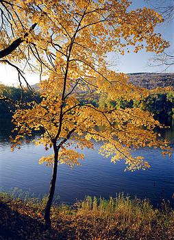 Autumn Maple Tree - Delaware River by Phil Degginger