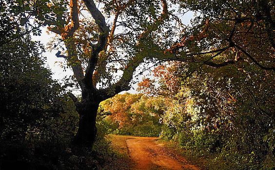 Kantilal Patel - Autumn Moods