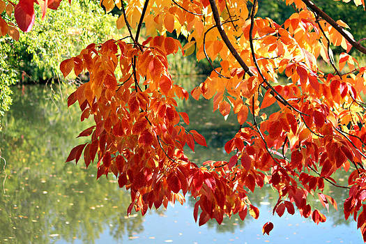 Autumn on the Pond by Jo Sheehan