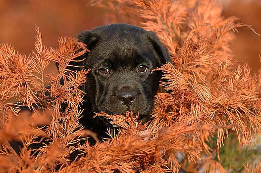 Waldek Dabrowski - Autumn puppy