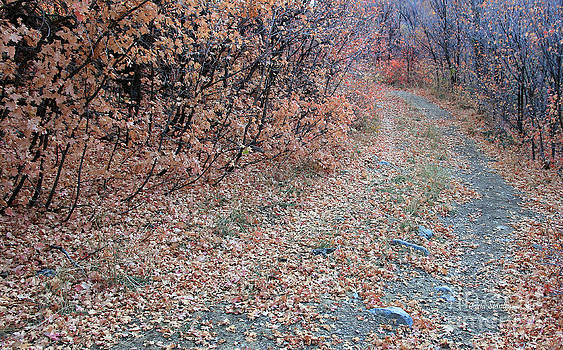 Autumn Road   by Carla   Stanley