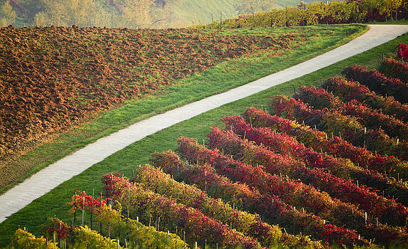 Francesco Riccardo  Iacomino - Autumn road
