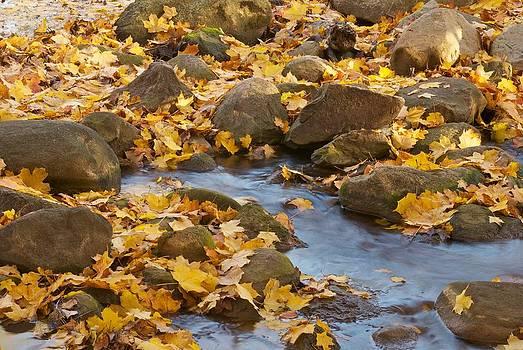 Michael Peychich - Autumn slipping Away 0437