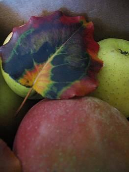 Autumn Splendor by Deb Martin-Webster