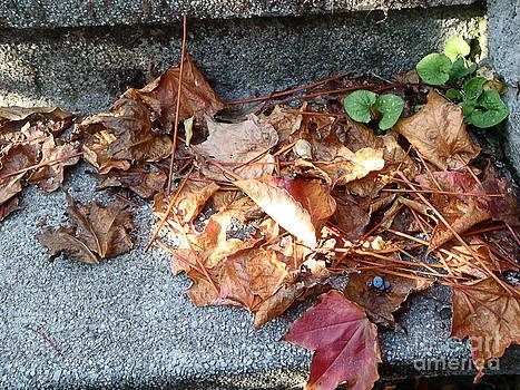 Autumn stairs by Marisa Gabetta