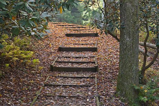 Darlene Bell - Autumn Stairway