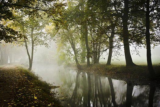 Autumn Stream at Morning by Steve Buckenberger