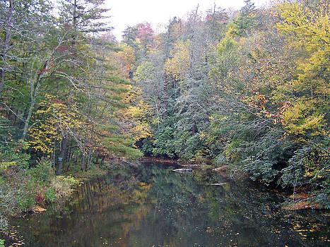 Patricia Taylor - Autumn Stream