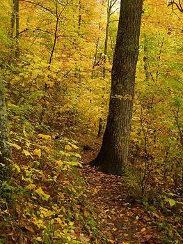 Autumn Stroll by Jeff Moose